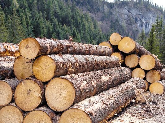 Anunț licitație masă lemnoasă