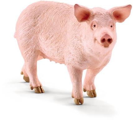 Atentionare sacrificii porci
